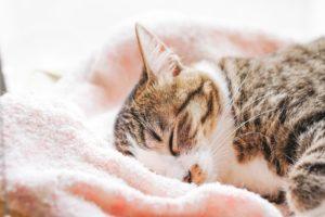 タオルケットと猫